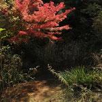 スイレン池の紅葉