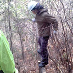 かかり木の処理(木の上に乗るのは危険デス)