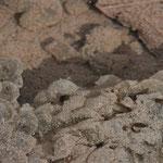 アカガエルの卵隗と孵化