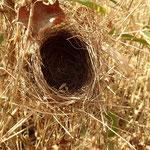 メジロの巣跡