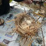 子供達の愛情のこもった鳥の巣完成