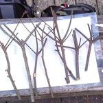 3月イベント鳥の巣クラフトの素材