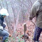 急斜面での間伐にロープは必需品