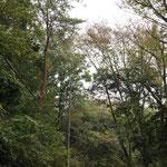 写真4c 管理道の上で高木が重なり合い