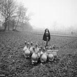 En 1955, avec les oies dans les champs du Moulin Bleu