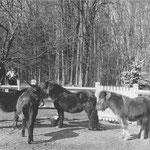 En mars 1970, Cécile Aubry, Mehdi, les poneys shetland Paquita et Lancelot et l'ânesse Samba dans le parc du Moulin Bleu © Jours de France n°797