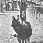 En novembre 1965, Mehdi et l'ânesse Samba © Un jour n°3