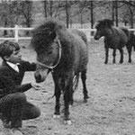 En 1967, Mehdi et les poneys shetland Paquita et Lancelot dans le parc du Moulin Bleu