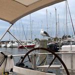 """Das ist """"Jonathan Seegull"""" - die Bootsmöve. Sie hat uns während unseres Aufenthaltes täglich besucht"""