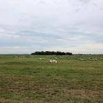 Vorbei an der typischen Heidelandschaft von Hiddensee