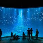 Unglaublich diese großen Aquarien