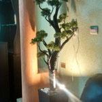 Lampara de Bonsai y Base de Madera 1.70 Mts de Altura X 50 cm diámetro $ 1750.00