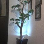 Florero de Madera con Bonsai Jumbo e Iluminacion