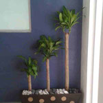 Jardinera con Palos de Brasil