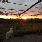Admirer le coucher de soleil durant une journée d'été / Au mas de Janita ©