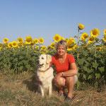 Se balader au coeur des champs de tournesols / Au mas de Janita ©