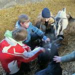 ... zum Pony- oder Bauernhof