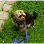 Doofe Leine Freiheit für alle Hunde