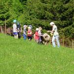 Die Kinder sollten die Schafe mit Mais herlocken, ob ihnen das gelingt?