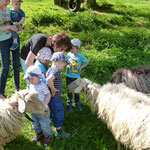 Vorsichtige Annäherung zwischen Kindern und Schafen.
