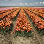 Noord West Friesland