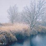 Winter in natuurgebied De Deelen.