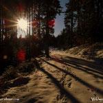 .....liegt noch viel Schnee im Wald.....