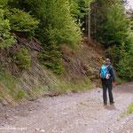 ...viele neue Forststraßen wurden in die Landschaft geschlagen, hier am Weg zum Obersattler...