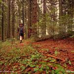 17.07.2021 - Der Regen hat sich am Nachmittag verabschiedet, zum Kopf bereinigen noch einmal in den Wald spaziert.....