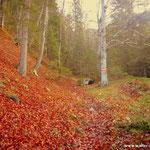 ....schöner Wanderweg, geht es hinauf ......