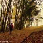 ....schöne Waldwege.....