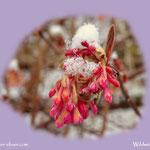 ...die Frühblüher haben auch noch ein wenig Feuchtigkeit abbekommen....