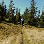 nach dem kurzen Abstieg über den Grat geht es wieder hinein in den Wald