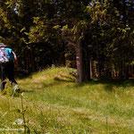 ...über schöne Wanderwege und Forststraßen gelangt man hinüber zum Alptor (1386 m)...