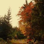 ....Herbst, eine farbenfrohe Jahreszeit....