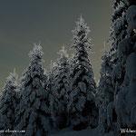 ....ein besonderer Winterwald, könnte fast eine Weihnachtskarte werden. Das Leben ist schön.
