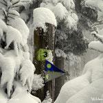 """12.12.2020 - Heute war es wieder so weit, eine """"knackige"""" Winterwanderung auf die Wildwiese...."""
