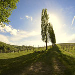 """ein klein wenig """"Italien"""", echt super (Photo by Annabella Ebner)"""