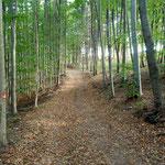 schöne Buchenwälder am Weg nach Oberkohlstätten