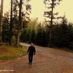 """kurz vor dem """"Hansl in Reith"""" führt der Weg hinauf ins """"Walddörfl""""."""