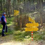 ....endlich weg vom Asphalt, hier im Wald, ist es deutlich angenehmer....