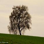 """...ein einsamer Baum, auf einem langen Feld, beim Gehöft """"Dorn"""""""