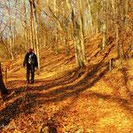 der Weg führt durch schöne Buchenwälder bis hin zum........