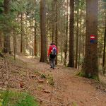 weiter geht mein Weg zum Lüsswaldsattel...