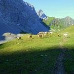in der Nähe des Kromsee sind Pferde auf der Alm