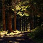 """....mein Weg führt mich entlang des """"Jagasteigs"""" hinüber......."""