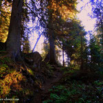 ...ein schöner Weg durch den Wald....