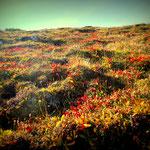 der Herbst kommt, die Almfläche wird schon bunt