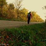 ....hier ist der Weg begrenzt durch Wälder, viele Fasane und Hasen kreuzen meinen Weg, aber die sind einfach zu schnell für mich.....