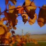 ...Weingärten im Bereich der Langen Lacke....